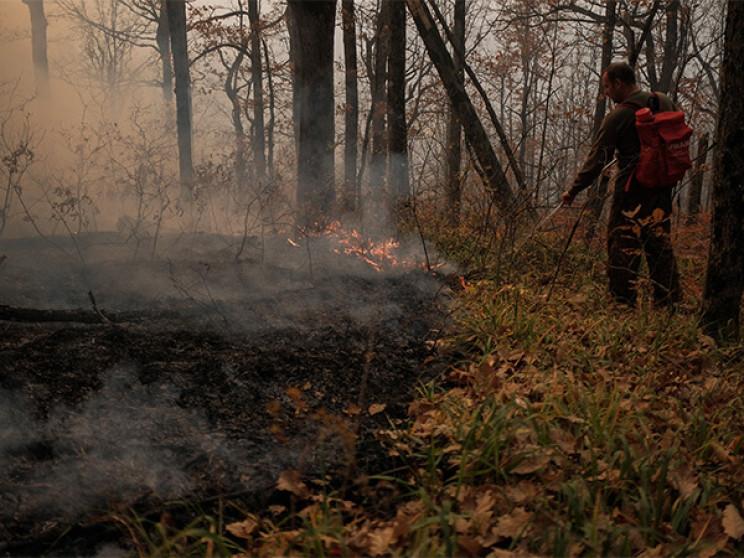 На Кубані тривають лісові пожежі…