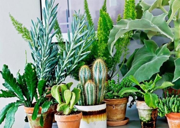 Комнатные растения не приносят пользы, –…