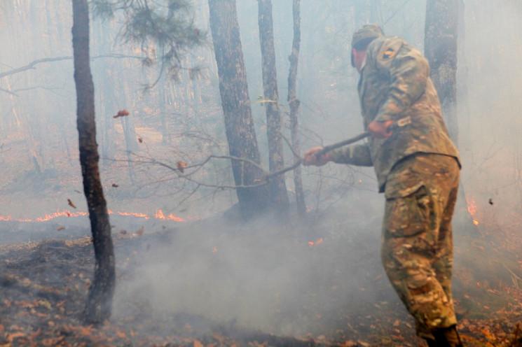 Підпал став причиною лісових пожеж на Ку…