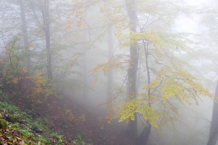 Ноябрьские выходные: В Киеве холодные но…