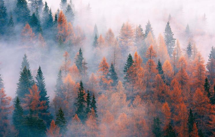Ноябрьская туманная пасмурность: В Киеве…