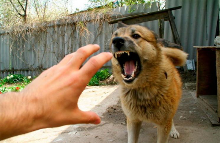 В Іршаві у собаки виявили сказ…