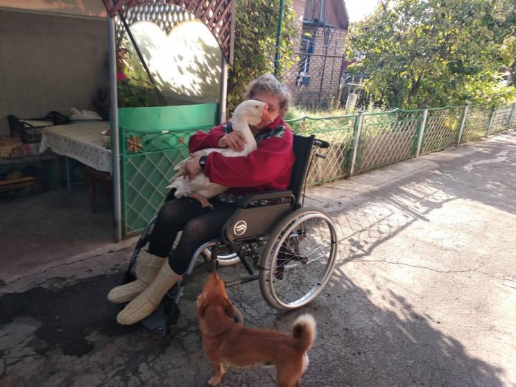 На Вінниччині гуси-довгожителі радують п…