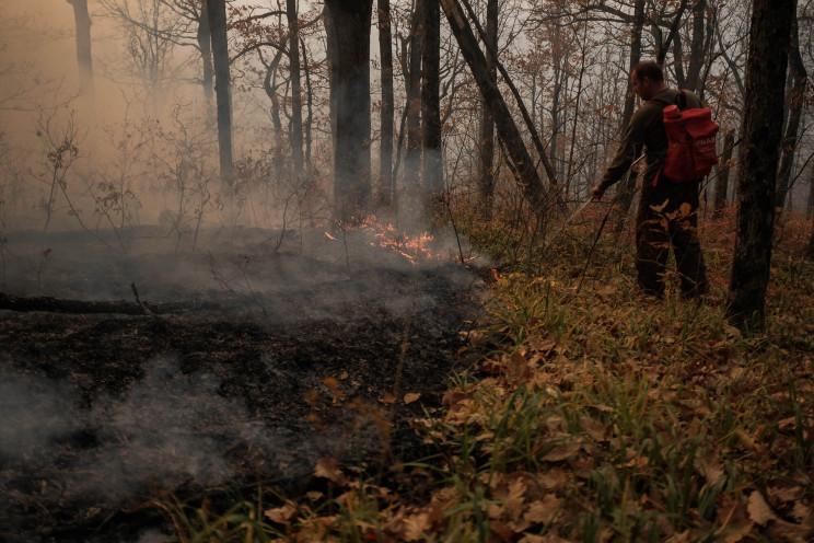 У Туапсинському районі загасили лісову п…