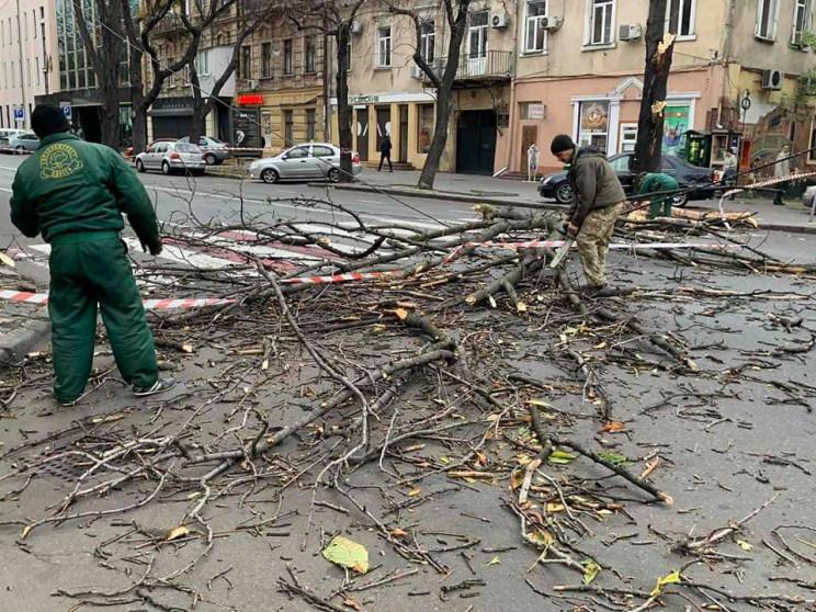 Вітер повалив дерева у центрі та спально…