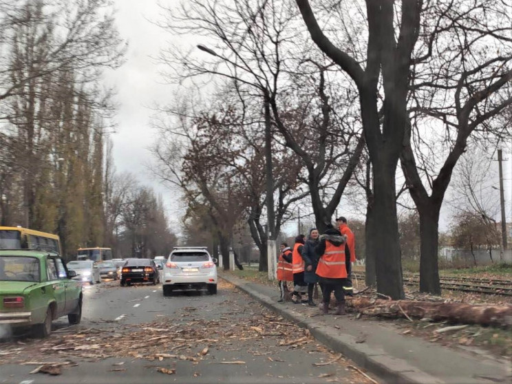 Кількість повалених дерев в Одесі збільш…