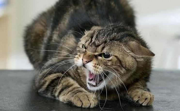 На Харківщині скажений кіт травмував люд…
