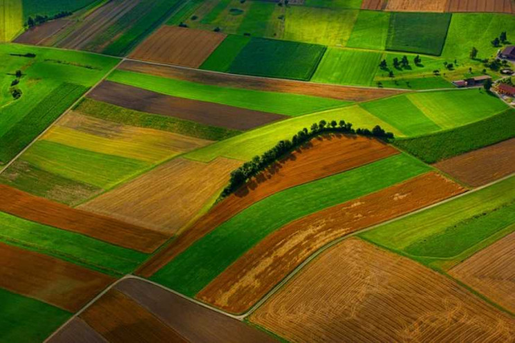 Майже 800 порушень щодо охорони земель ц…