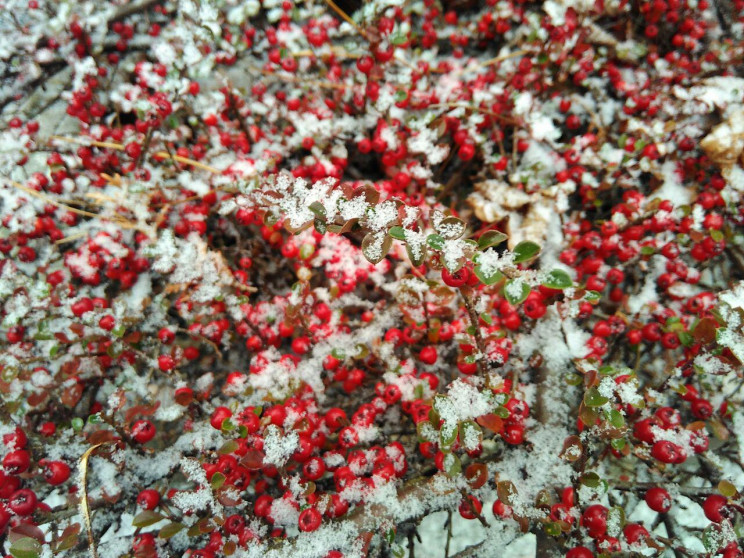 Як Львівщину казково засипає першим сніг…