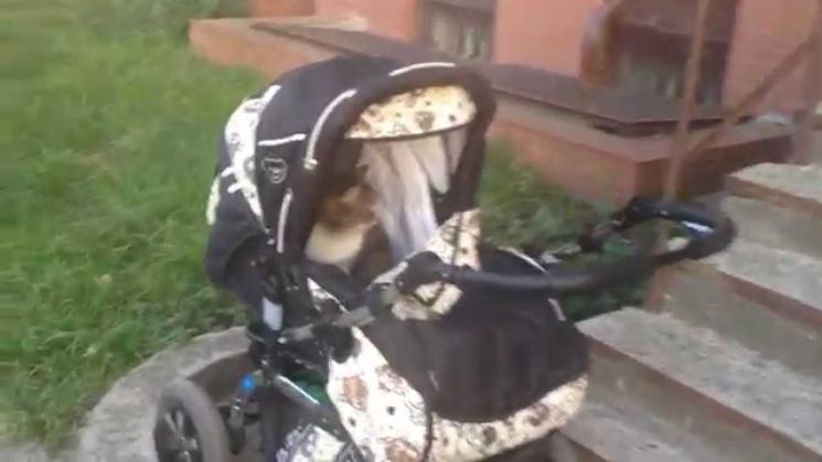 У Липовецькому районі кіт задушив 9-міся…