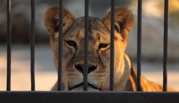 Запорізький зоопарк показали у відомому…