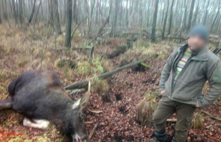 За вбивство лося на Славутчині мисливцям…