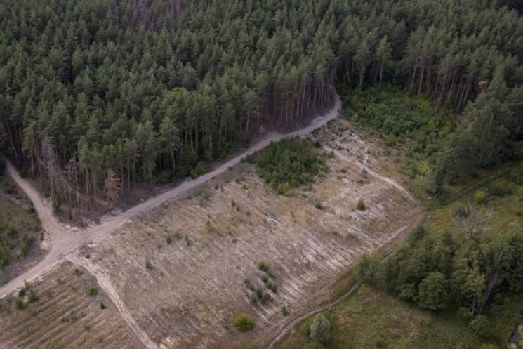 Уничтожение леса на Харьковщине: Руковод…
