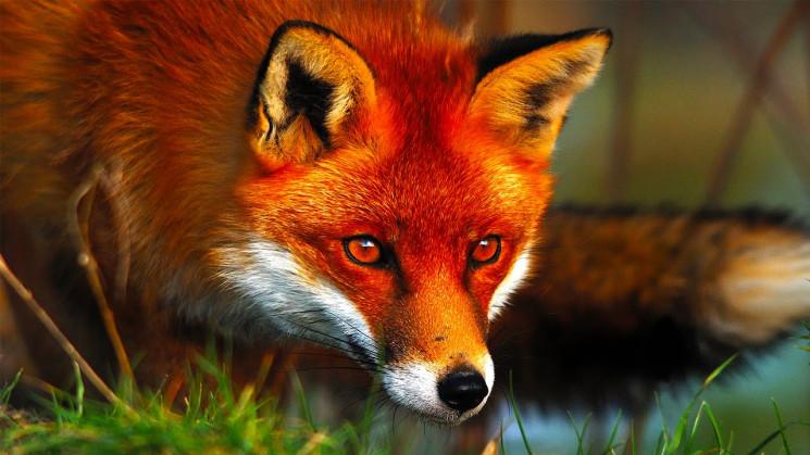 В Бердянске лиса прогуливалась по набере…