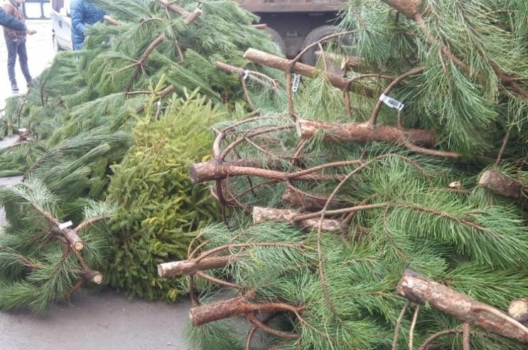 Новогодние елки: Тысячи деревьев не прод…