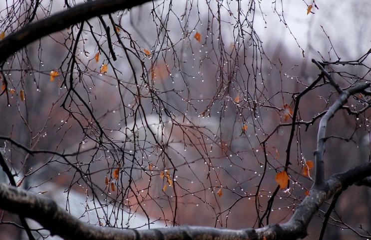 Тумани і опади залишати Кубань не збираю…
