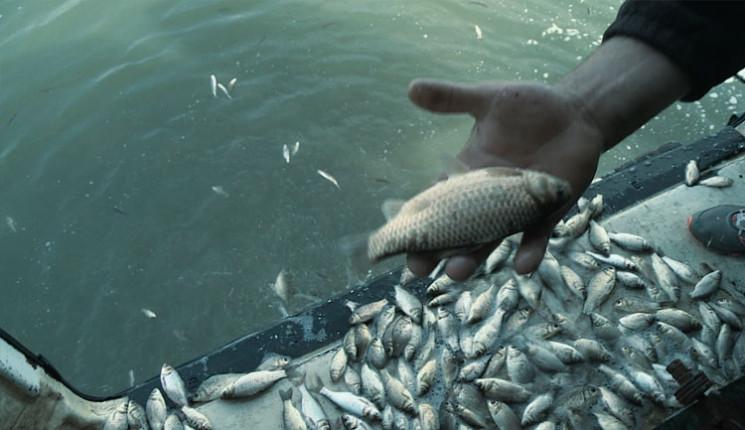 Коропом та товстолобом зариблять рибоохо…