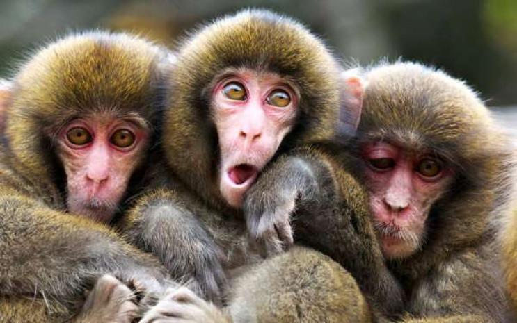 У Харкові по супермаркету бігала мавпа,…