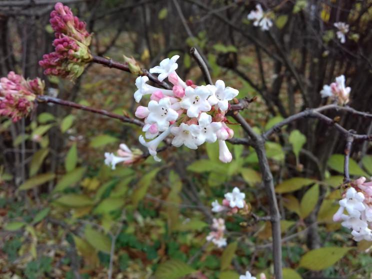 Квітучий грудень: В одеському Ботанічном…