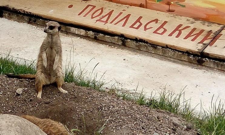 Подільський зоопарк у Вінниці святкує св…