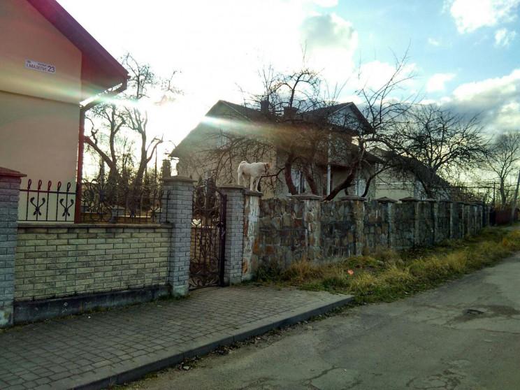 У місті на Львівщині виявили пса-стрибун…