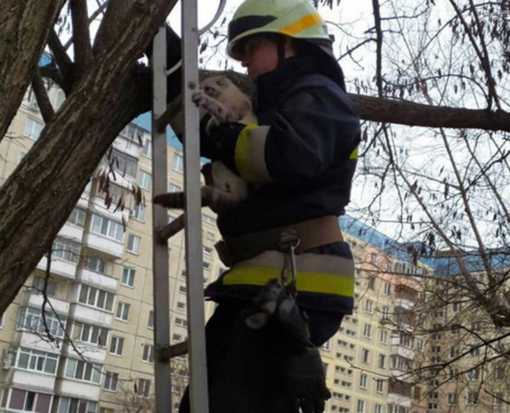 У Дніпрі кіт дві доби просидів на дереві…