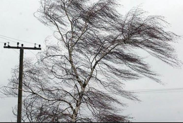 На Хмельниччині через вітри поламало дер…