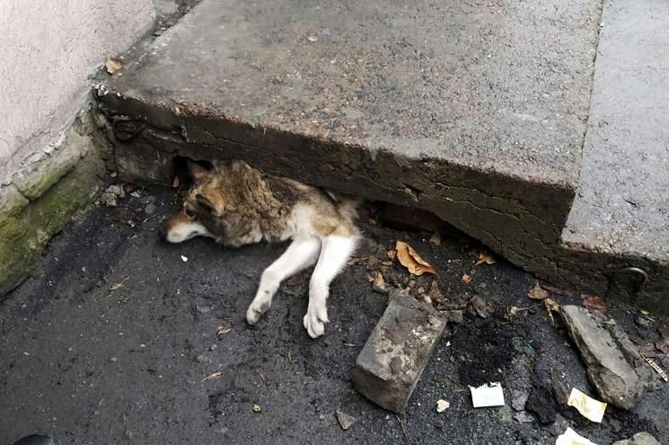 На Днепропетровщине спасли собаку, котор…