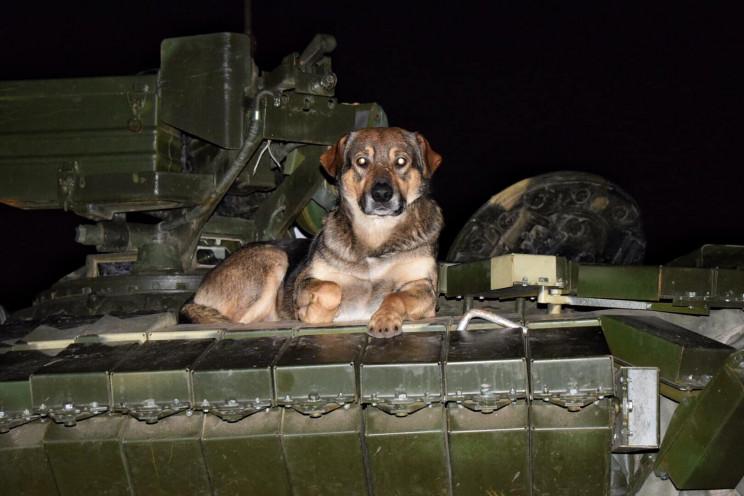 Рядом с Днепром день и ночь водили танки…