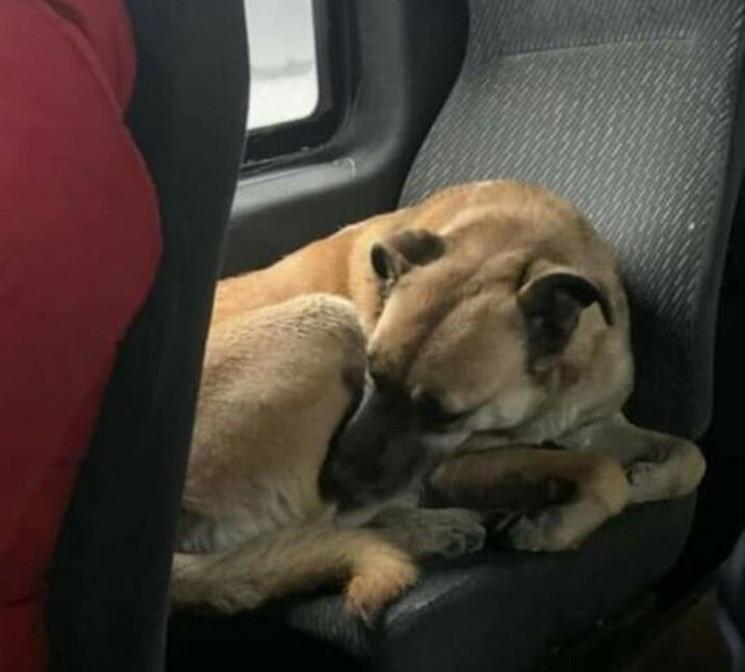 В Днепре собака пряталась от фейерверков…