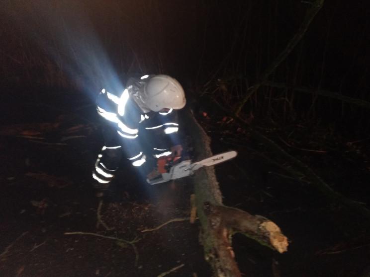 В центре Кропивницкого упало дерево…