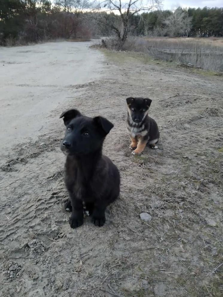 Под Днепром в лесу нашли трех маленьких…