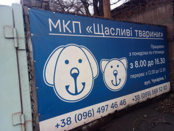 """Не """"щасливі тварини"""": Як у Маріуполі зну…"""