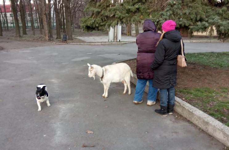 Як у парку Дніпра коза гралася із собака…