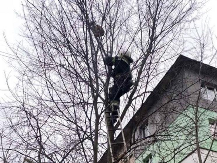 У Полтаві рятувальники зняли з дерева ко…