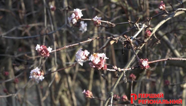 На Херсонщине вовсю цветет североамерика…