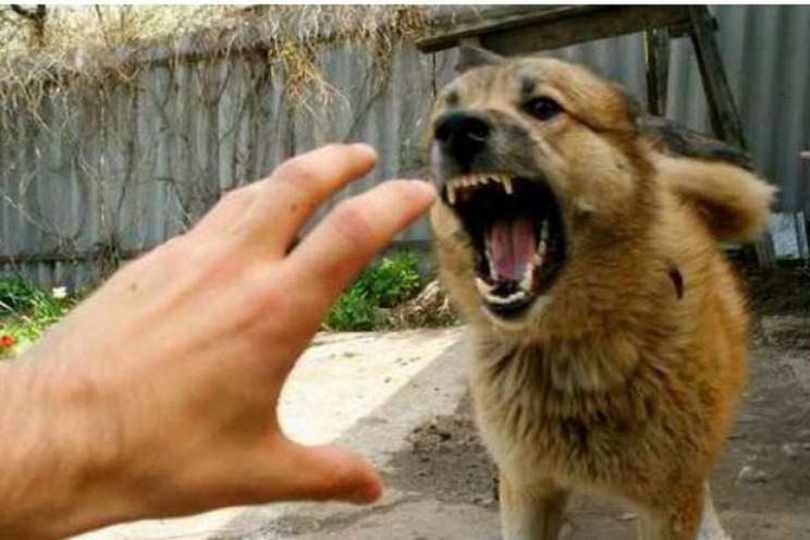 У Мукачеві собака посеред міста покусала…