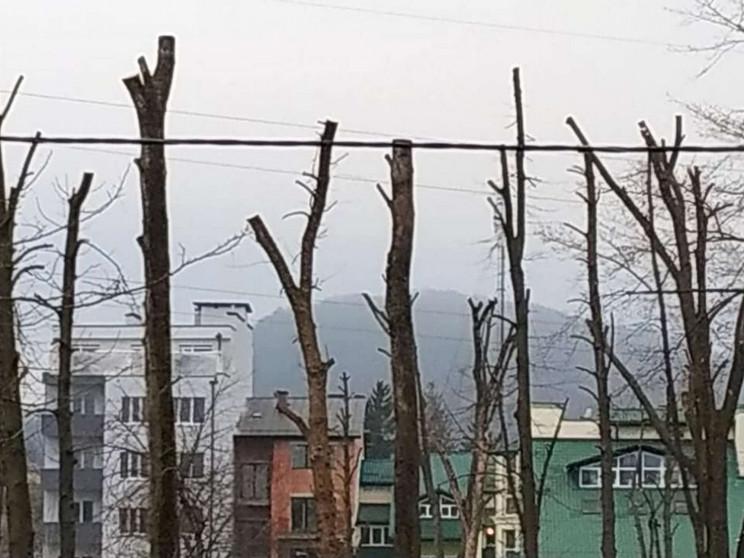 Як у Винниках дерева в парку перетворили…