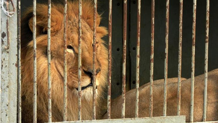 Останній рік цирків із тваринами: Хто на…