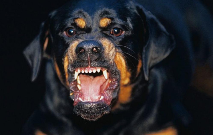 В Одесі патрульні вбили собаку, який нап…