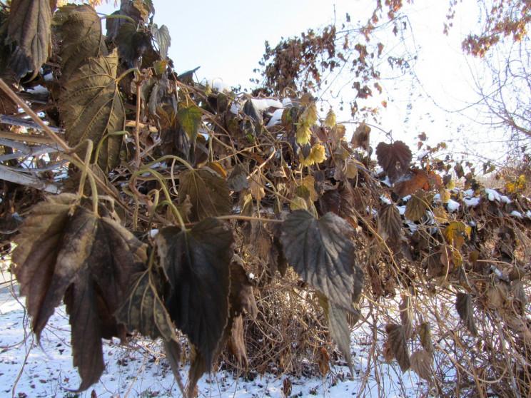 Білі мухи налетять: 22 січня у Черкасах…