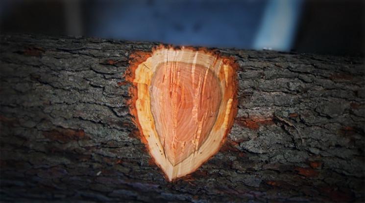 Містяни стурбовані: На деревах у парку н…