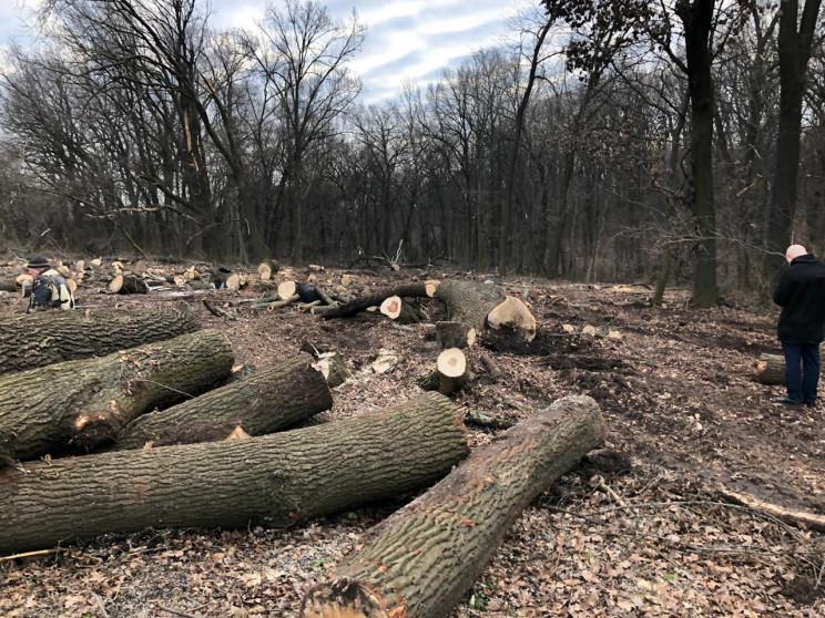 У лісгоспі заявили, що вирубка багаторіч…
