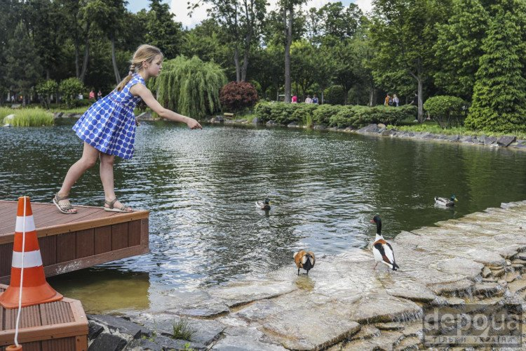 Дівчинка годує качок у Межигір'ї