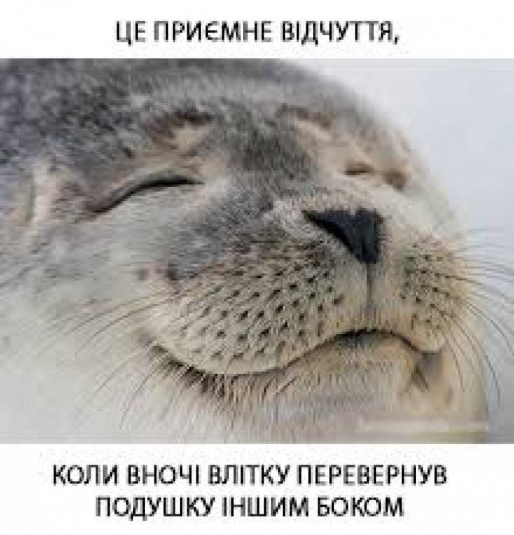 мем про подушку влітку