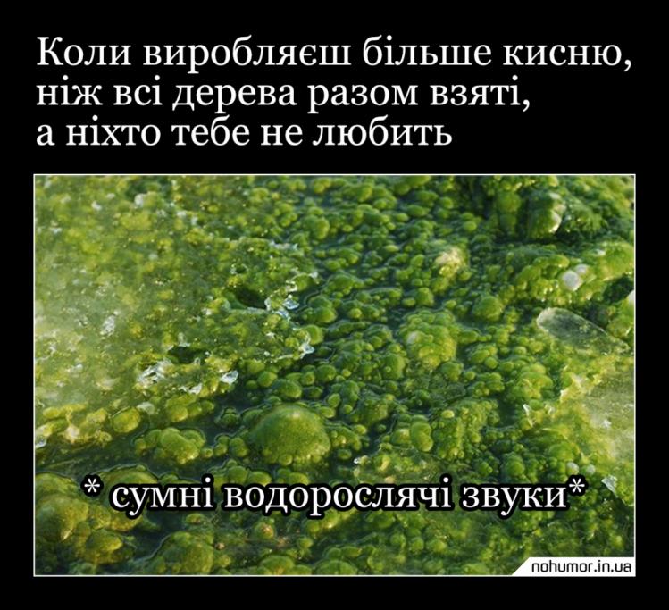 Мем про водорості